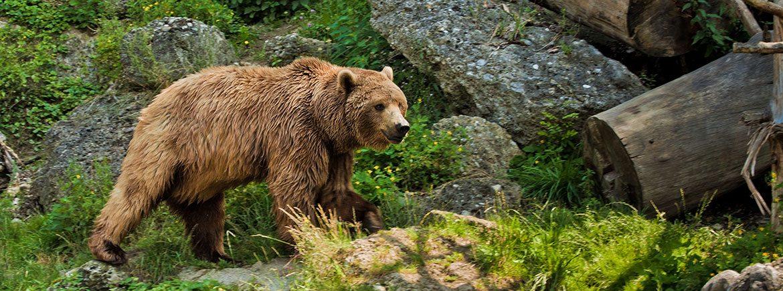 Ausflugsziele im Salzburger Land - Familienbauernhof Nöglhof in Radstadt - Wildpark